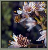 Beecause I love bees...