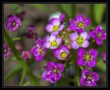 Tiny pretty flowers