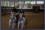 The Lipizar horse show