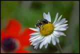 The spring enunciator