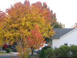Fading colors down our street