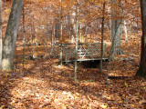 Covered with fallen leaves