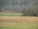 Horses in the fields