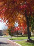Multiple colors on a single tree