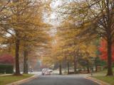 Darnstown Road