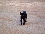 The resort's cat