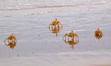 The crab army advances