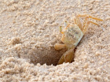 My hole in the sand