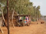 Amidst the eucalyptus