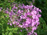 Buncha flowers
