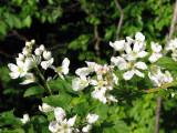 Wild flowers_1