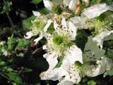 Wild flowers_4
