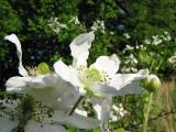 Wild flowers_5