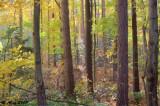 Autumn Woods 2009_1