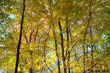 Autumn Woods 2009 2