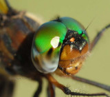 multi-facted emerald eyes