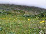 Sandåslandet Lappland 2008 ett äventyr i storslagen vildmark