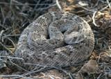 Arizona Wildlife; October 2010