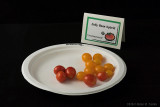Jelly Bean Hybrid.jpg