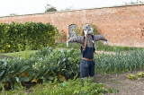 protecting the vegetables in the walled garden