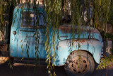 Blue truck under the willow tree