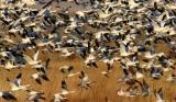 Bosque del Apache Bird refuge, New Mexico