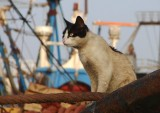 A paradise for cats -- the town's fishing wharf