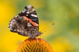 Insects, Amphibians. Reptiles and Flora
