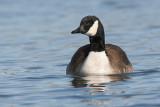 goose 122