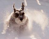Super pup!!!