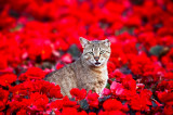 The Cat in Red