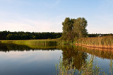 Solska Forest - Koman