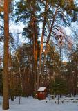 Five Pines