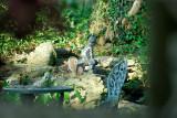 Squirrel at Pond.jpg