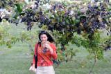 Senaca Lake Vineyard