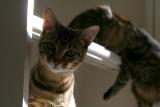 Kiki Ignores Her Sister For The Spotlight.