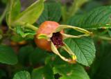 Blandy's Herb Garden