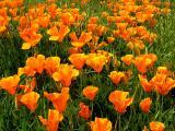 central_valley_california