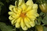 Yellow  FlowerOctober 8, 2008