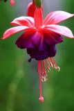 Flower MacroOctober 14, 2008