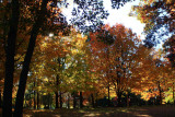 More Autumn ColorsOctober 19, 2008