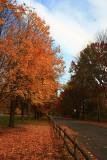 Autumn SceneNovember 1, 2008