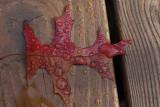 Macro - Leaf on DeckNovember 7, 2008