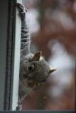 Squirrel at WindowNovember 15, 2008