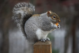 SquirrelDecember 7, 2008