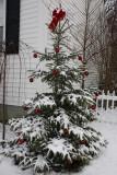 Spruce Christmas TreeDecember 17, 2008