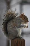 SquirrelJanuary 20, 2009