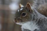 Squirrel CloseupJanuary 23, 2009