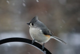 Titmouse in the snowMarch 2, 2009