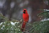 CardinalMarch 9, 2009